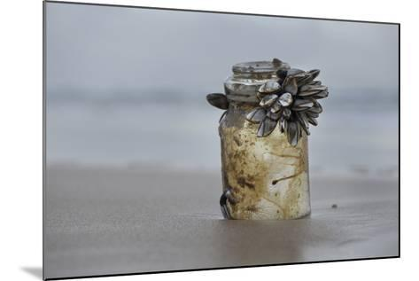 Goose Barnacle (Pollicipes Sp) Attached to Bottle-Luis Quinta-Mounted Photographic Print