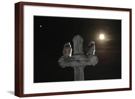 Long Eared Owl (Asio Otus) Chicks Perched on a Cross-Bence Mate-Framed Art Print