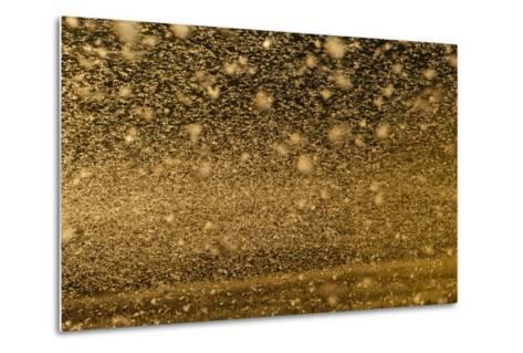 Locust Plague (Locusta Migratoria Capito) Threatens Crops in South Madagascar, June 2010-Inaki Relanzon-Metal Print