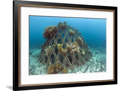 Corals Attached to Structure of Bio-Rock-Franco Banfi-Framed Art Print