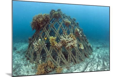 Corals Attached to Structure of Bio-Rock-Franco Banfi-Mounted Photographic Print