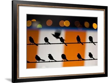 Great-Tailed Grackle - Quiscalus Mexicanusbrownsville-Sandesh Kadur-Framed Art Print