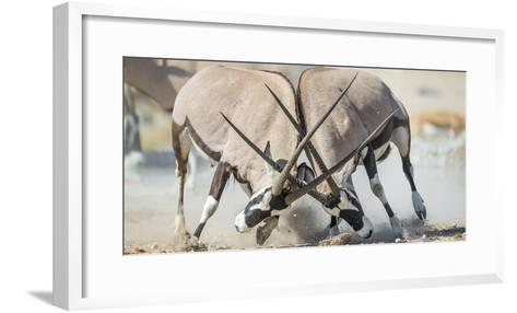 Two Gemsbok Bulls (Oryx Gazella) Males Fighitng, Etosha National Park, Namibia-Wim van den Heever-Framed Art Print