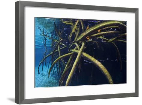 Red Mangrove (Rhizophora Mangle) in Sinkhole-Claudio Contreras-Framed Art Print