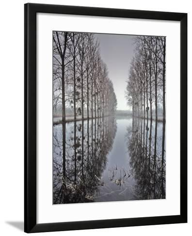 Two Rows of Poplar (Populus Sp-Pascal Tordeux-Framed Art Print