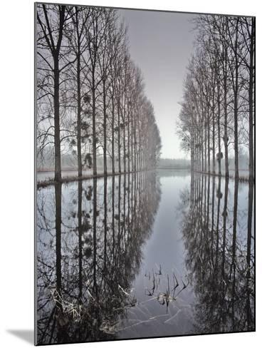 Two Rows of Poplar (Populus Sp-Pascal Tordeux-Mounted Photographic Print