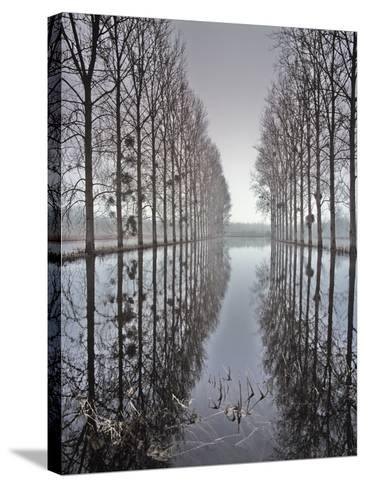 Two Rows of Poplar (Populus Sp-Pascal Tordeux-Stretched Canvas Print