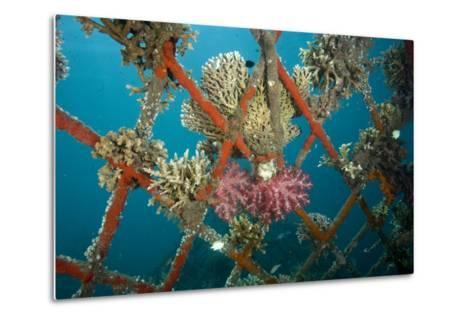 Hard and Soft Corals and Encrusting Sponge on the Structure of Bio-Rock-Franco Banfi-Metal Print