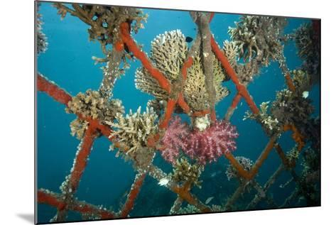 Hard and Soft Corals and Encrusting Sponge on the Structure of Bio-Rock-Franco Banfi-Mounted Photographic Print