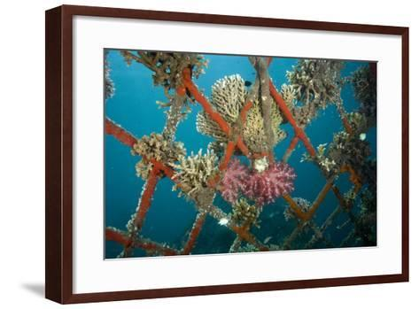 Hard and Soft Corals and Encrusting Sponge on the Structure of Bio-Rock-Franco Banfi-Framed Art Print