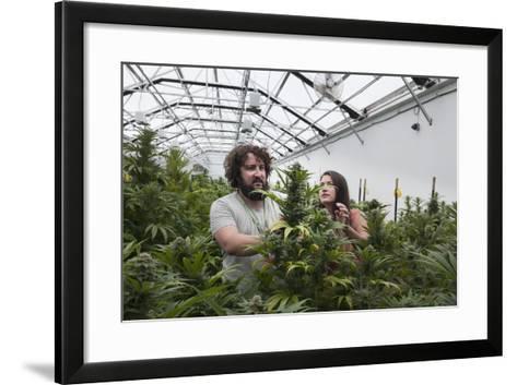 Man and Woman with Cannabis Plant in Organic Marijuana Farm, Pueblo, Colorado, USA, June 2015-Jeff Rotman-Framed Art Print