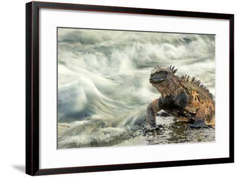 Marine Iguana (Amblyrhynchus Cristatus) on Rock Taken with Slow Shutter Speed to Show Motion-Ben Hall-Framed Art Print