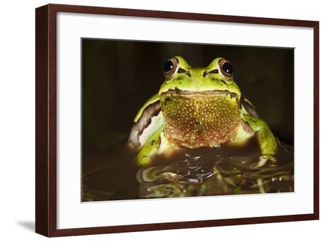 Ridged Tree Frog (Hyla Plicata), Milpa Alta Forest, Mexico, September-Claudio Contreras Koob-Framed Art Print
