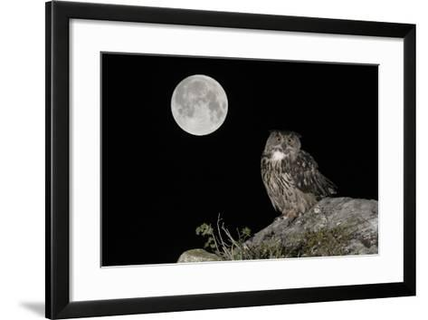 Eurasian Eagle Owl (Bubo Bubo) Adult Perched-Andy Trowbridge-Framed Art Print