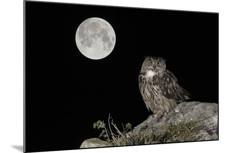 Eurasian Eagle Owl (Bubo Bubo) Adult Perched-Andy Trowbridge-Mounted Photographic Print