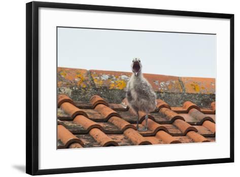Herring Gull--Framed Art Print