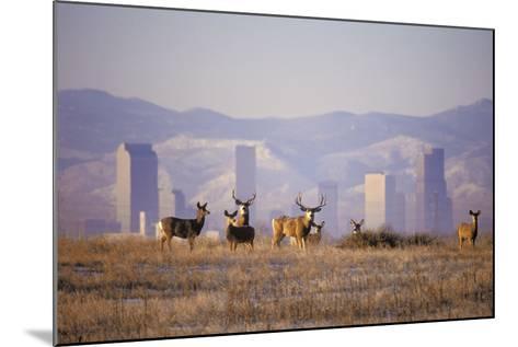 Mule Deer (Odocoileus Hemionus)-Wendy Shattil-Bob Rozinski-Mounted Photographic Print