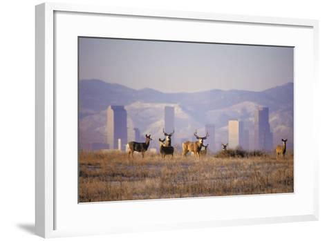 Mule Deer (Odocoileus Hemionus)-Wendy Shattil-Bob Rozinski-Framed Art Print