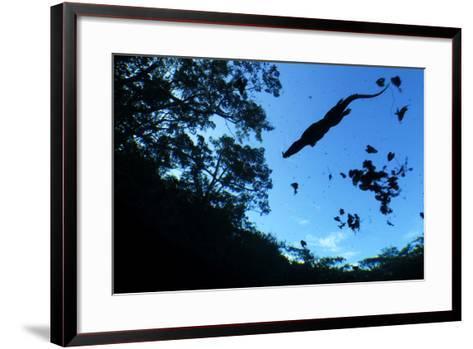 Morelet's Crocodile (Crocodylus Moreletii) Silhouetted in Sinkhole-Claudio Contreras-Framed Art Print