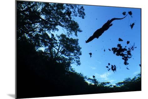 Morelet's Crocodile (Crocodylus Moreletii) Silhouetted in Sinkhole-Claudio Contreras-Mounted Photographic Print