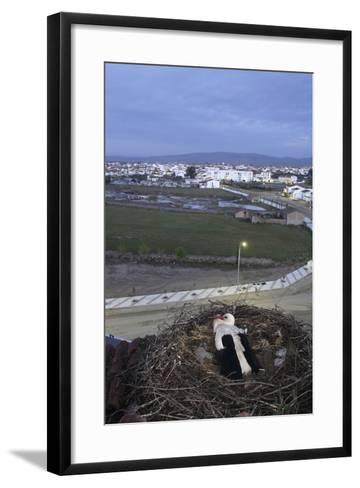 White Stork (Ciconia Ciconia) in Nest Overlooking Town-Jose B. Ruiz-Framed Art Print