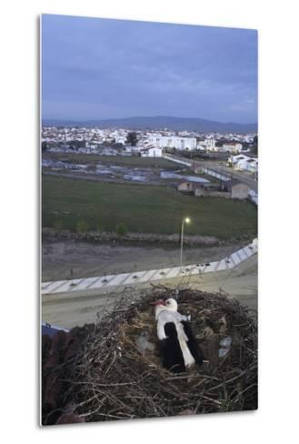 White Stork (Ciconia Ciconia) in Nest Overlooking Town-Jose B. Ruiz-Metal Print