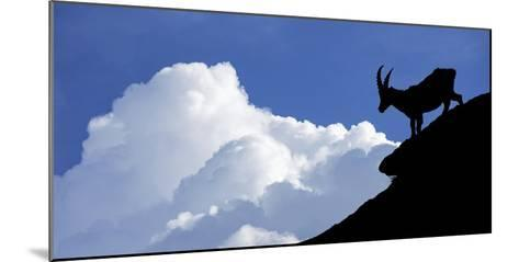 Silhouette of Alpine Ibex (Capra Ibex) Against Thunderstorm Clouds-Philippe Clement-Mounted Photographic Print