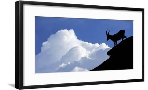 Silhouette of Alpine Ibex (Capra Ibex) Against Thunderstorm Clouds-Philippe Clement-Framed Art Print