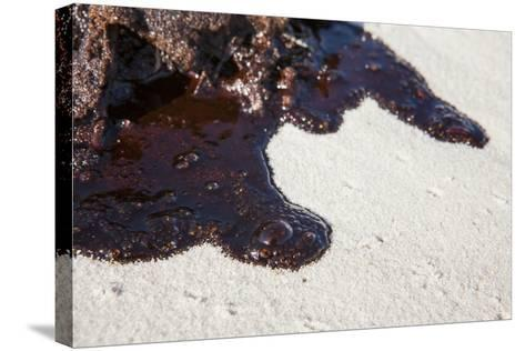 Oil on Beach from the Bp Oil Spill, Alabama, USA. Gulf of Mexico, June 2010-Krista Schlyer-Stretched Canvas Print