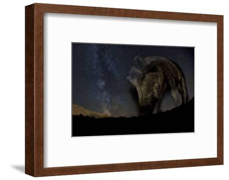 Wild Boar (Sus Scrofa) at Night with the Milky Way in the Background, Gyulaj, Tolna, Hungary-Bence Mate-Framed Art Print