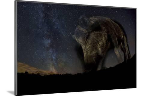 Wild Boar (Sus Scrofa) at Night with the Milky Way in the Background, Gyulaj, Tolna, Hungary-Bence Mate-Mounted Photographic Print