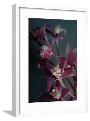 Dark Orchid IV v.2-Elizabeth Urquhart-Framed Art Print