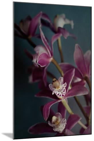 Dark Orchid IV v.2-Elizabeth Urquhart-Mounted Art Print