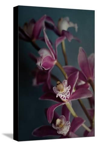 Dark Orchid IV v.2-Elizabeth Urquhart-Stretched Canvas Print