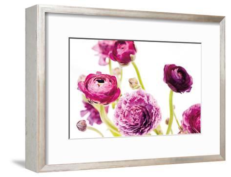 Spring Ranunculus IV-Laura Marshall-Framed Art Print