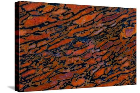Dinosaur Petrified Bone-Darrell Gulin-Stretched Canvas Print