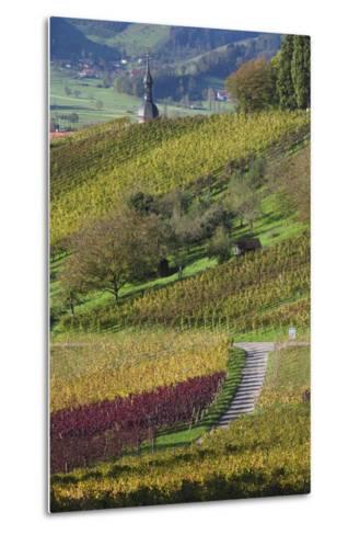 Germany, Baden-Wurttemburg, Black Forest, Gengenbach, Hillside Vineyards in Fall-Walter Bibikow-Metal Print