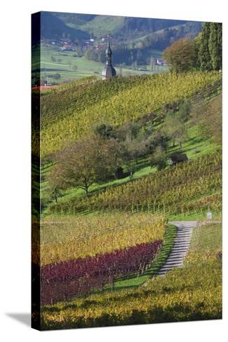 Germany, Baden-Wurttemburg, Black Forest, Gengenbach, Hillside Vineyards in Fall-Walter Bibikow-Stretched Canvas Print
