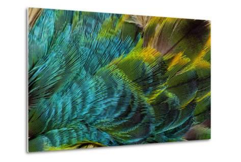 Feather Design-Darrell Gulin-Metal Print