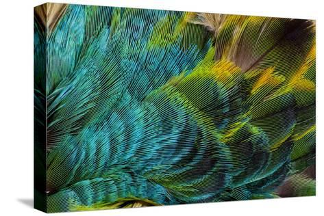 Feather Design-Darrell Gulin-Stretched Canvas Print