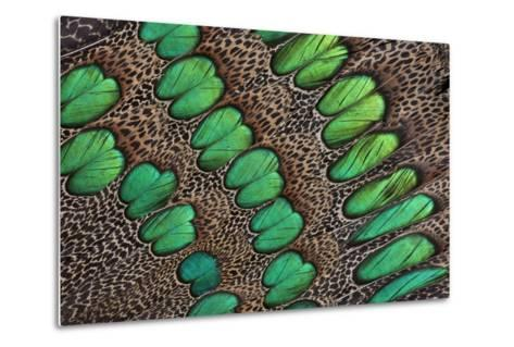 Feather Design of the Malay Peacock Pheasant-Darrell Gulin-Metal Print
