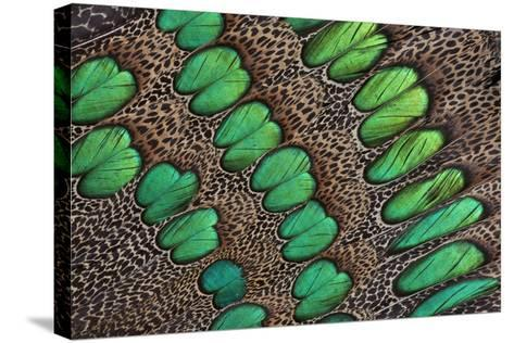 Feather Design of the Malay Peacock Pheasant-Darrell Gulin-Stretched Canvas Print