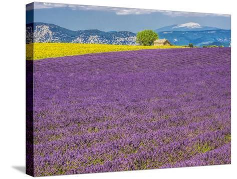 France, Provence, Old Farm House in Field of Lavender and Sunflowers-Terry Eggers-Stretched Canvas Print