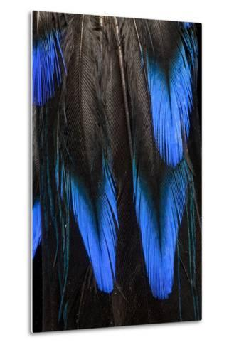 Feather Pattern in Black and Blue-Darrell Gulin-Metal Print