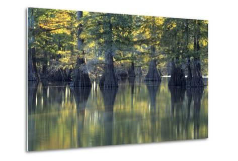 Bald Cypress Trees Horseshoe Lake State Park Illinois-Richard and Susan Day-Metal Print