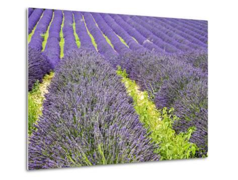 France, Provence, Patterns in the Lavender Field Near Roussillon-Terry Eggers-Metal Print