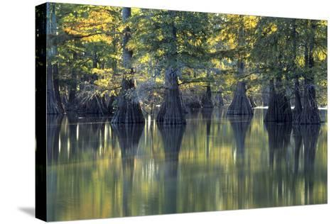 Bald Cypress Trees Horseshoe Lake State Park Illinois-Richard and Susan Day-Stretched Canvas Print