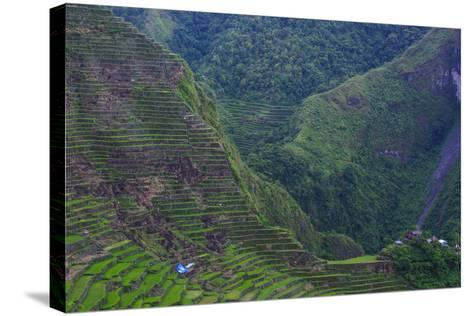 Batad Rice Terraces, Banaue, Luzon, Philippines-Michael Runkel-Stretched Canvas Print