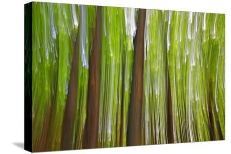 Canada, Quebec, Mount St-Bruno Conservation Park. Maple Grove Abstract at Sunset-Jaynes Gallery-Stretched Canvas Print