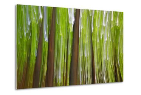 Canada, Quebec, Mount St-Bruno Conservation Park. Maple Grove Abstract at Sunset-Jaynes Gallery-Metal Print